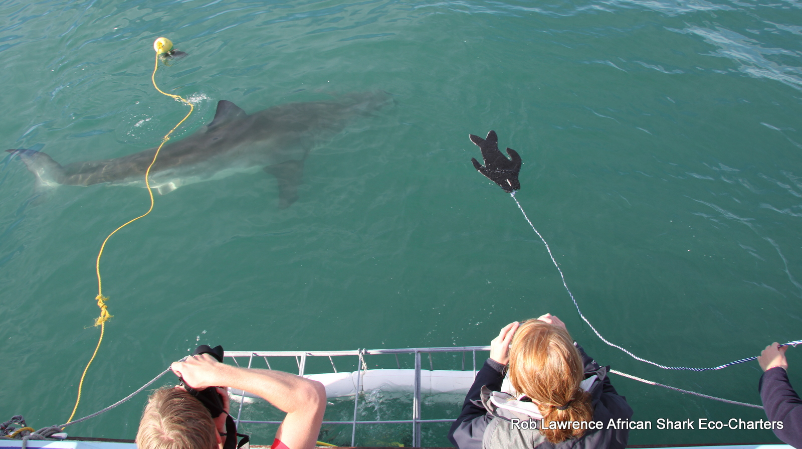 Cage diving with African Shark Eco-Charters
