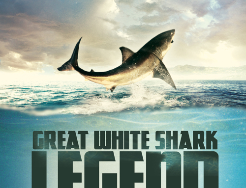ASEC film announcement – Great White Shark Legend