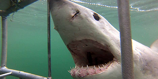 ASEC TOURS Shark Cage Diving in Gansbaai