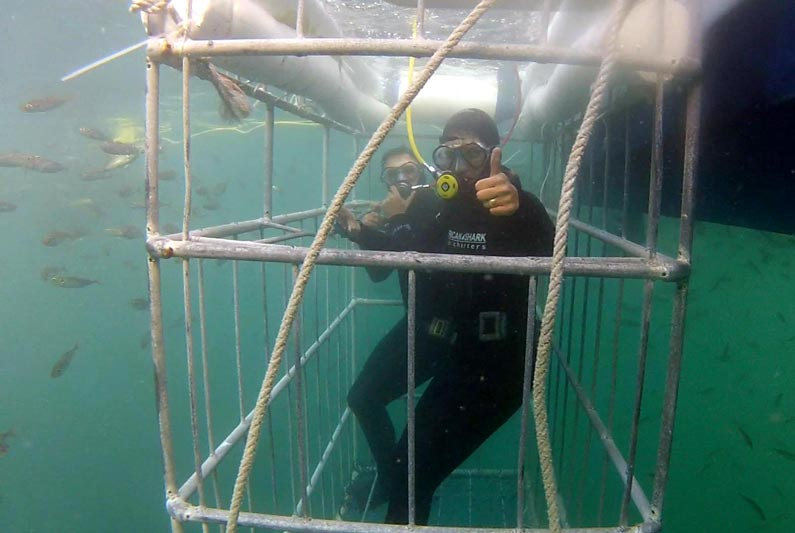 Afternoon Shark Cage Diving Trip – Simon's Town