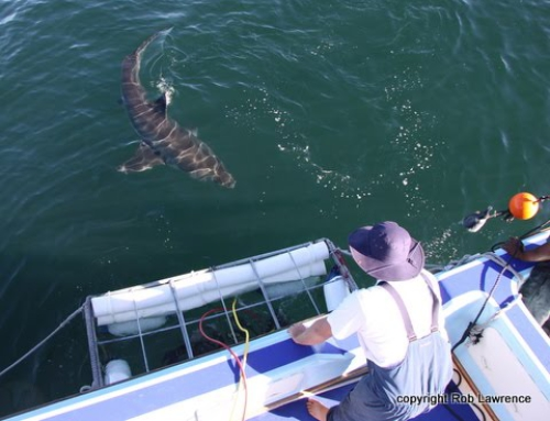 Brilliant Tripadvisor review on African Shark Eco-Charters
